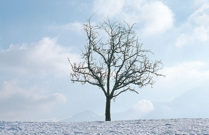 tree-winter-xxx
